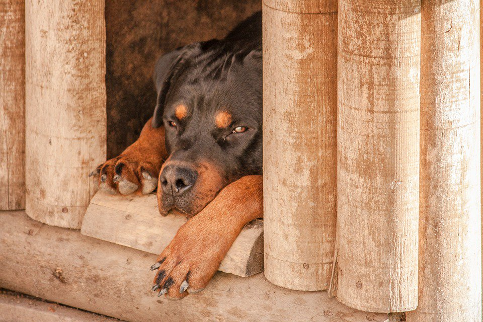 #Aisne : bébé tué par un #rottweiler, que dit la loi sur les chiens dangereux ? https://t.co/kKySI7Tc55