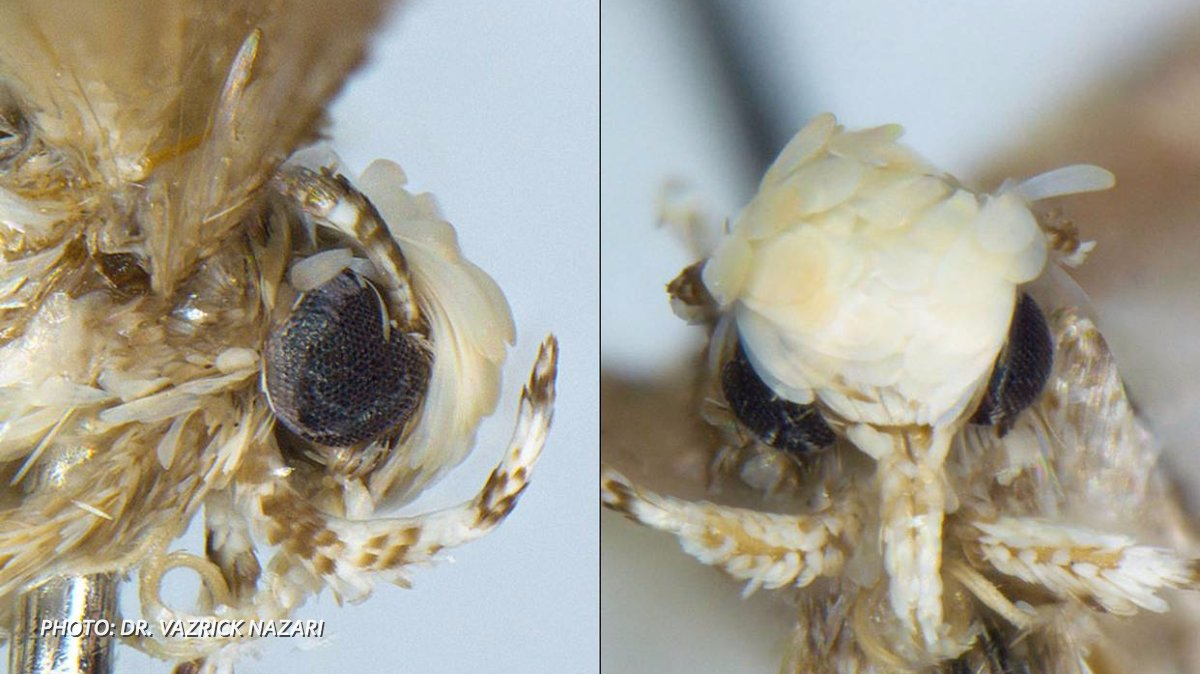 Trump's hair inspires name for newly discovered moth species