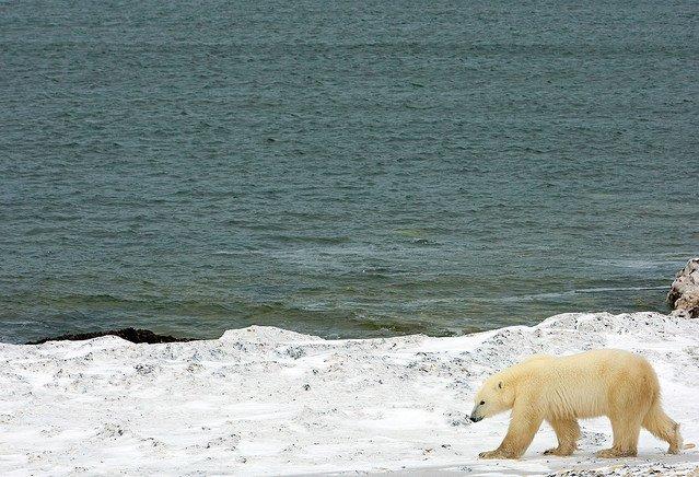 【何それこわい】北極圏の海底から奇妙な音…動物が消えたとの報告も https://t.co/jV1FS5qeYR  昨年からクジラやアザラシなどの姿が見られなくなったという。カナダ軍は音響の専門家らを派遣し、調査を実施すると発表。