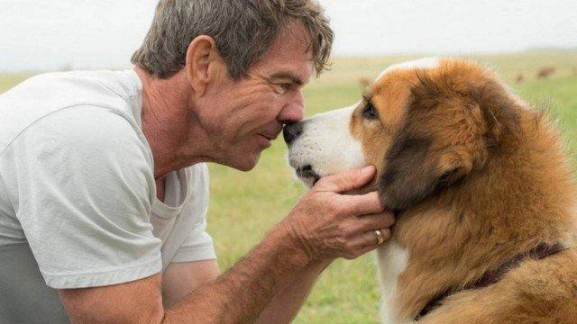 Premiere de 'Quatro vidas de um cachorro' é cancelada nos EUA após denúncias de maus tratos no set: https://t.co/z3umKT10DH
