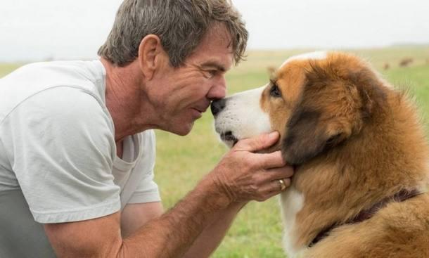 Longa 'Quatro Vidas de um Cachorro' vira pesadelo de marketing após divulgação de vídeo