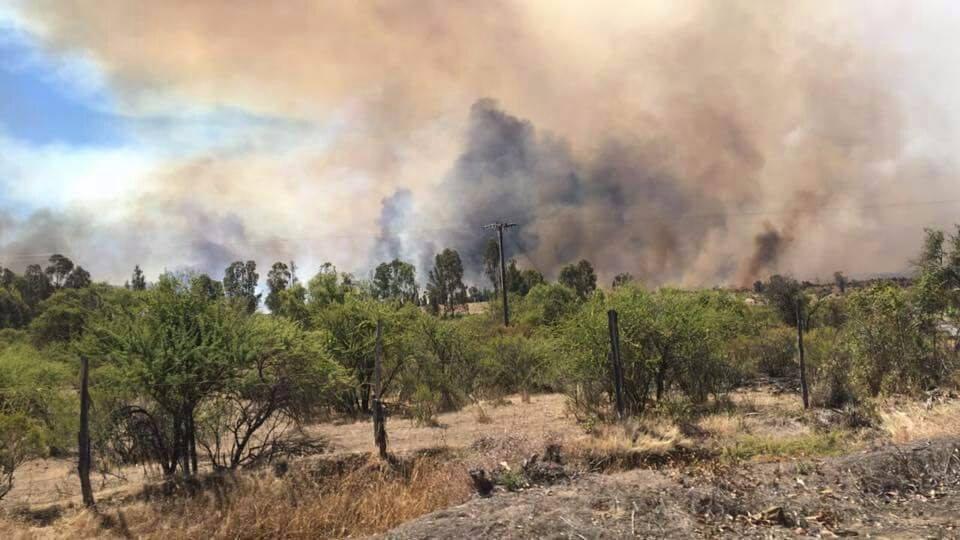 Incendio forestal en Cauquenes continúa fuera de control 1.500 hectáreas quemadas
