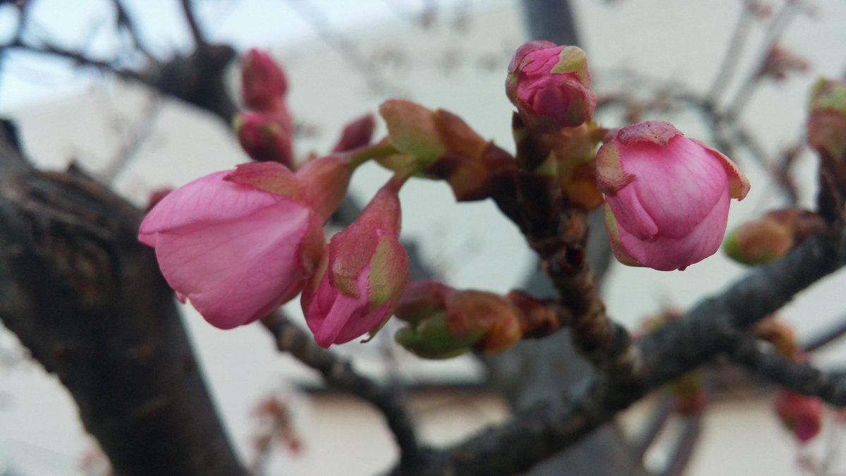 寒いと思っていても春は目の前❗頑張れ👊😆🎵受験生春は来てる❗#頑張れ受験生 #ハルチカ