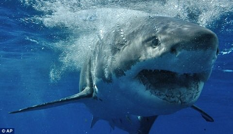 """""""You're terrific as far as I am concerned."""" - E.B. White #SaturdayMorning 🌊😆🦈 https://t.co/CYzOCSUfkt"""