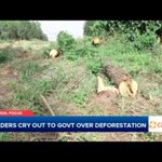 Leaders Cry Out to Government Over Deforestation