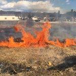 春に備え、近所の農家さん達と一緒に畑周りの枯れ草を焼きました。雑草の種や害虫を除去する効果があるからです。猛り狂う炎は恐