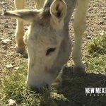 NM True TV - New Mexico Farm & Ranch Heritage Museum