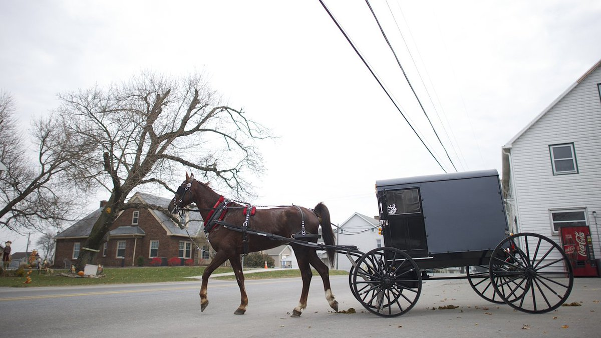 When horse diapers and freedom of religion collide  via @WSJ