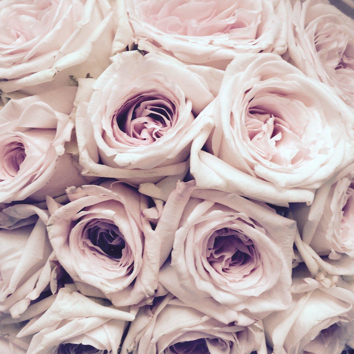 Ring a ring o' roses... x Stella https://t.co/w0yG7jOfHN