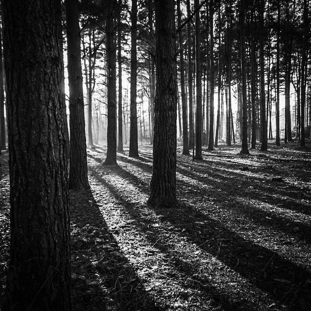Wood for the trees #blackwhite #sunshine https://t.co/3hW5PiPAHI https://t.co/B1kQyRbjVZ