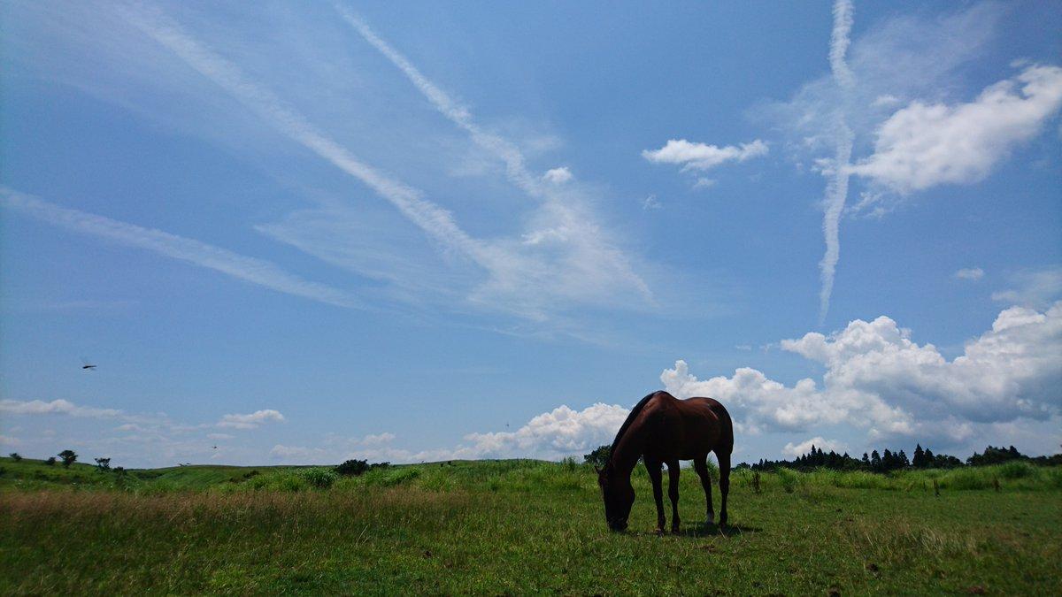 当牧場は実写版進撃の巨人のロケ地でしたので、進撃コスはもってこいですね👍立体機動やら何やらにビビらないお馬ちゃんたちなの