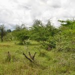 PROPERTY GUIDE: Acquiring land, property as foreign investor in TZ