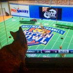 Image of kittenbowl from Twitter