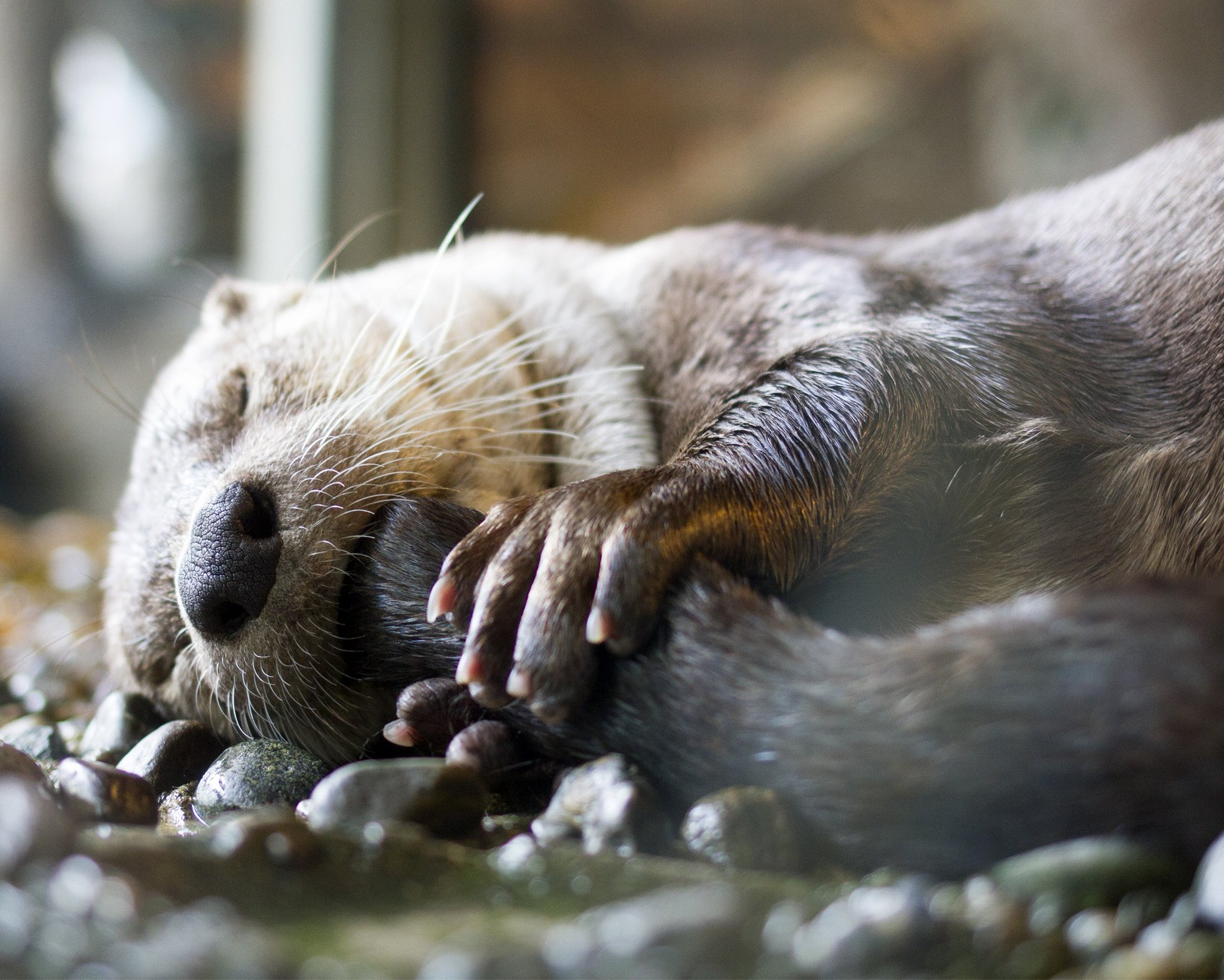 Our river #otters don't want to be left out of the #CuteAnimalTweetOff! https://t.co/9WfXmsEtCt