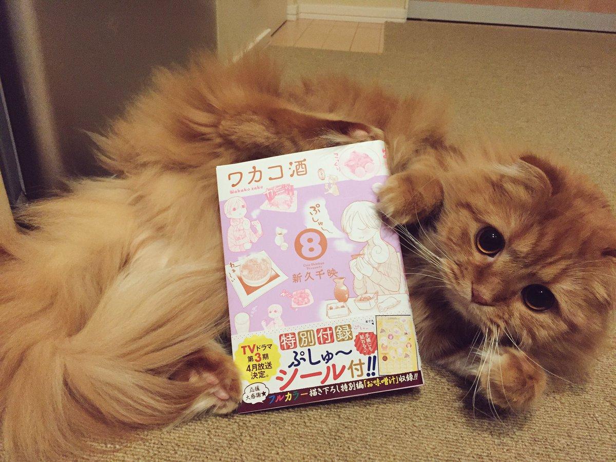 楽しみにしていた最新巻✨😆#猫 #ワカコ酒