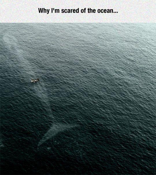 Why I'm scared of the ocean! https://t.co/Ysq4jW4fN1