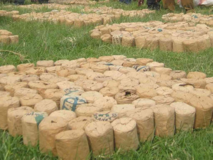 Police seize Sh200,000 bhang, arrest two in Yatta