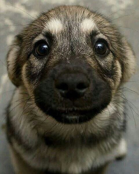 This dog needs a boop. Please help. https://t.co/5YANyC9HF5