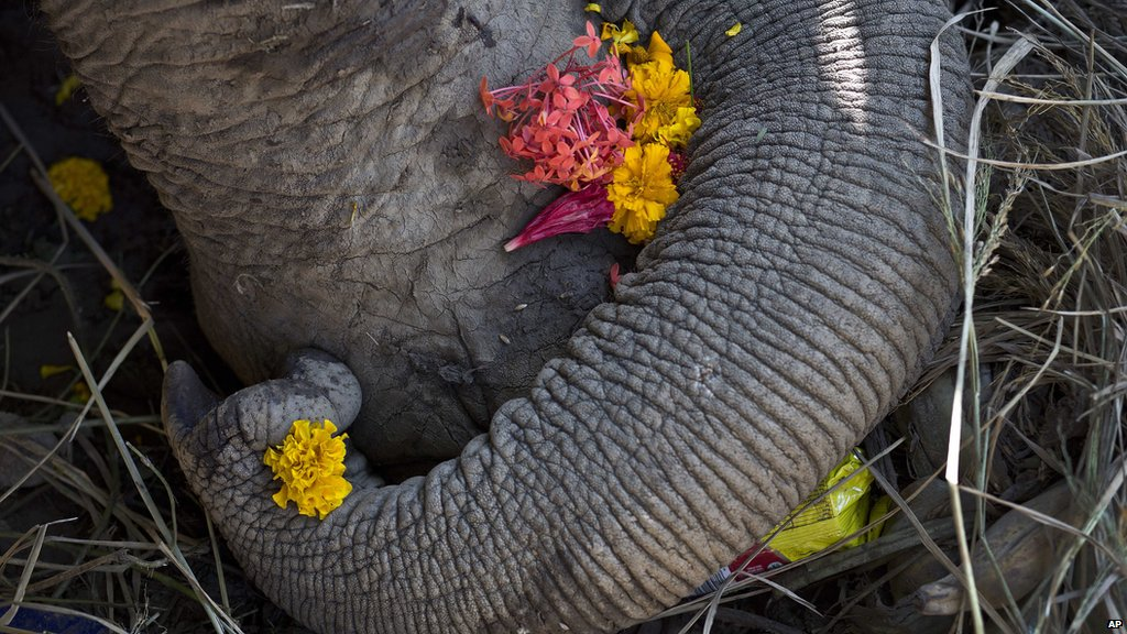 RT @BBCNewsAsia: One of the world's oldest elephants has died in India.  https://t.co/MPdPYuZFfP https://t.co/T7S0TDjkn9