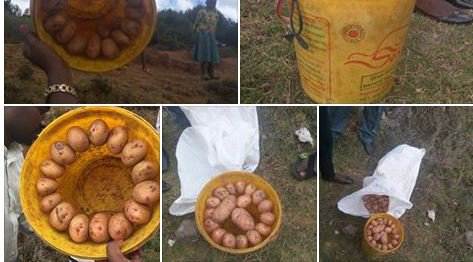 Beware: Why You Need to Inspect That Bucket of Potatoes You Buy by the Roadside (Pics)