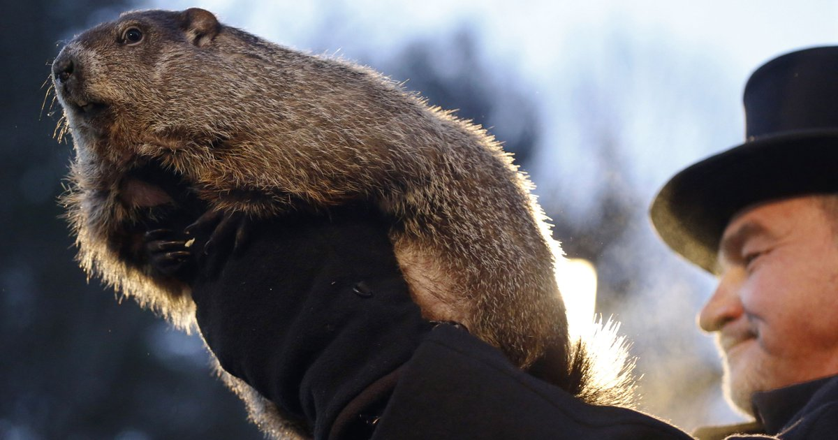 Punxsutawney Phil sees shadow, predicts 6 more weeks of winter