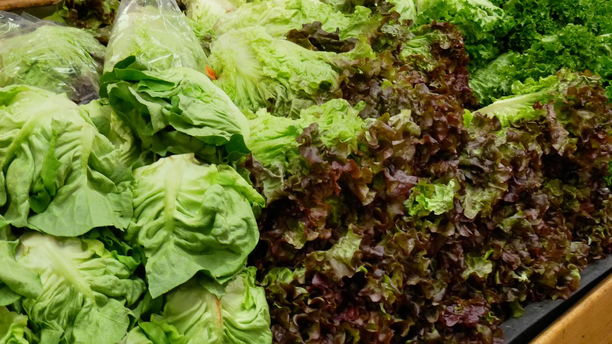 Shortage of lettuce, broccoli in Europe due to bad weather