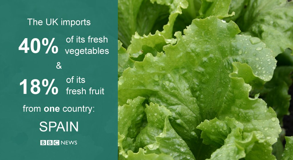 Bad weather in Spain has led to shortages of lettuce and other vegetables