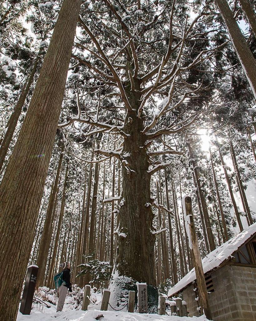 先月登った時と全然違う雪の世界にテンション上がり過ぎました。雪を纏った高見杉、神々しかった。#水曜登山部 #高見山 #お