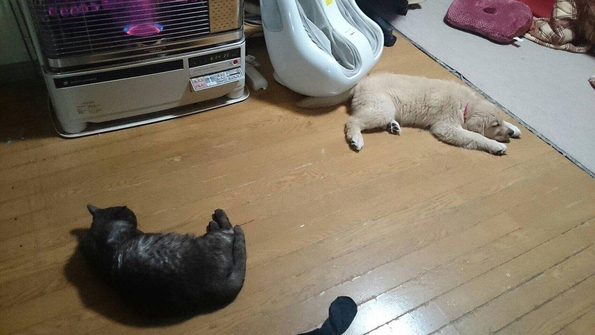 猫の話じゃない  実家の仲の悪かった犬猫がくっ付いて寝るほど仲良くなったらしい