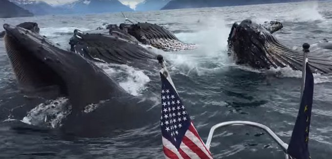 Lucky Fisherman Watches Humpback Whales Feed  https://t.co/A2IFRNT3LZ  #fishing #fisherman #whales #humpback https://t.co/bv7ANcXqCm