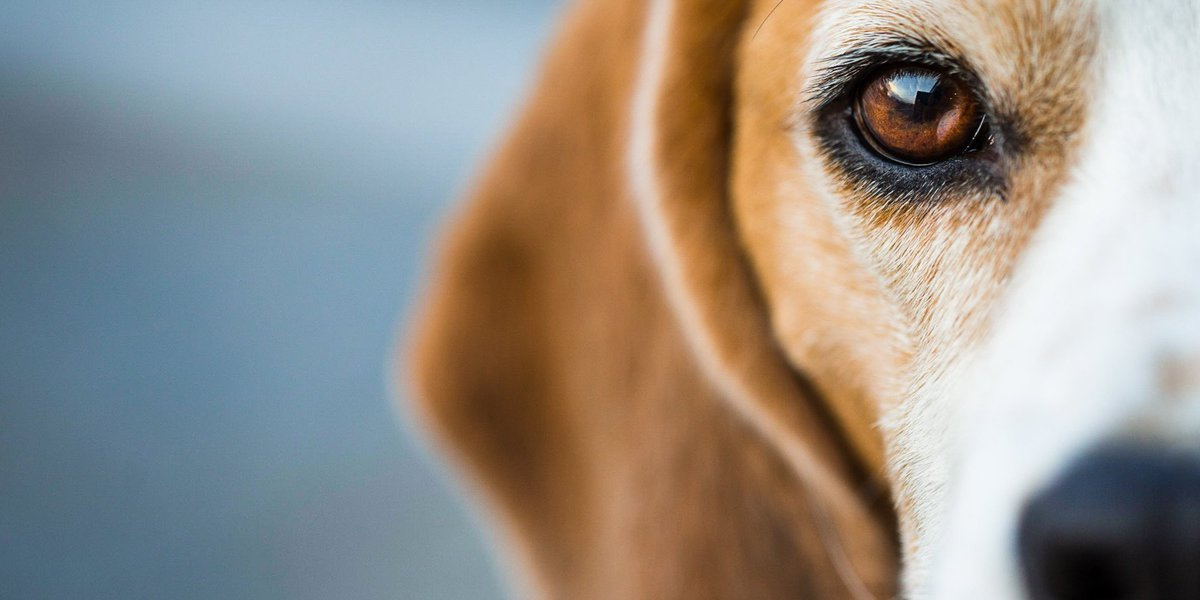 USDA starts reposting some of their deleted animal welfare records