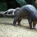 It's World Pangolin Day today, but will they become extinct soon?