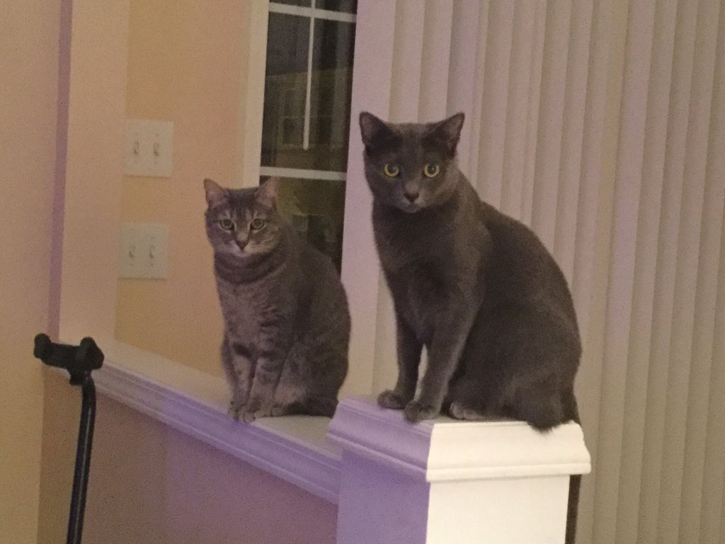 @anamariecox Mama Mitzi and daughter Daisy. https://t.co/gYCgLHzYQc