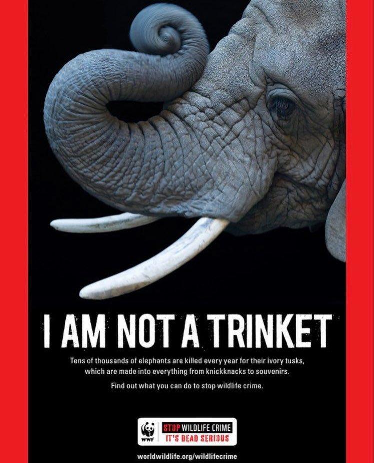 ❤️ if you ❤️ ????. @World_Wildlife https://t.co/rg54ICoB59