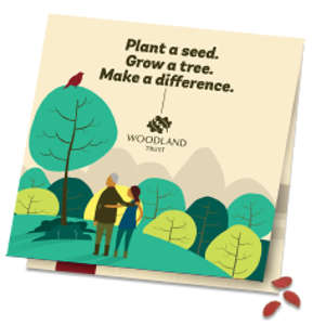 Free Tree Seeds from Woodland Trust - free freebies freestuff latestfreestuff