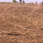 Long dry spell reaching crisis levels, government likely to declare disaster situation soon