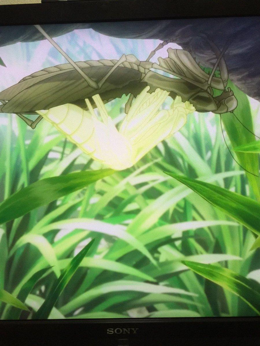アニメ弱虫ペダル。カマキリは翅が生え揃ってる成虫からの脱皮はありません(昆虫警察