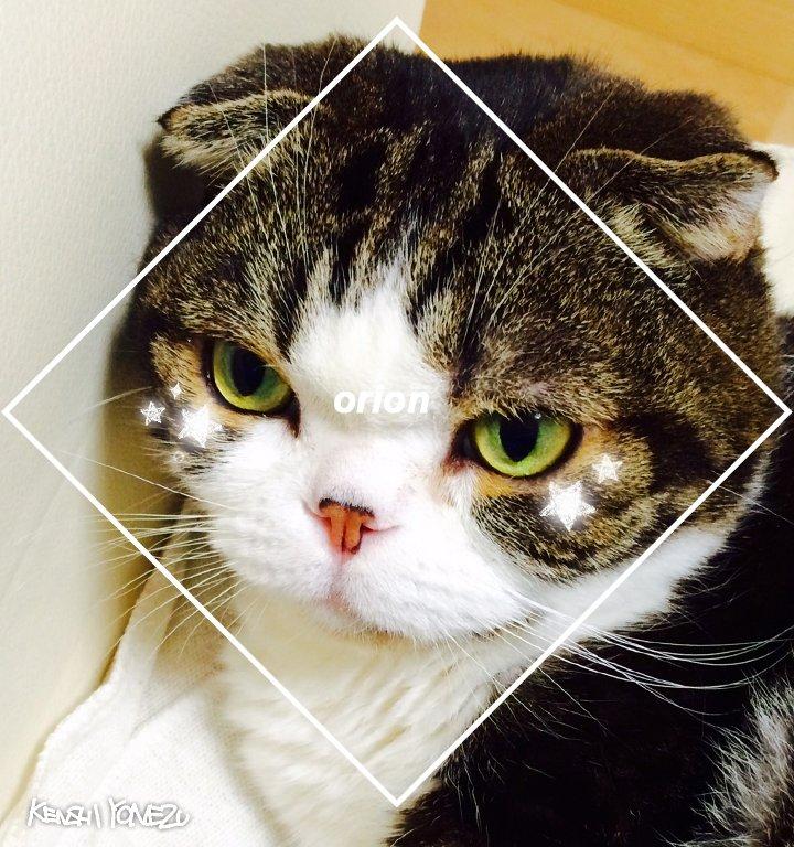 💫TVアニメ「3月のライオン」コラボ 💫羽海野チカ先生の愛猫「ブンちゃん」に米津玄師「orion」フィルターで撮影しても