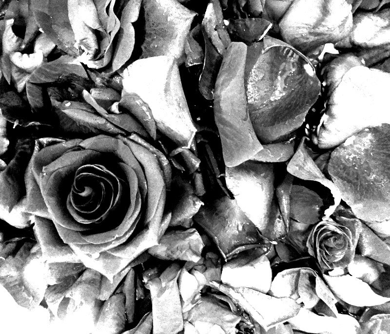 And,  wet roses, never go to waste ...  #❤  #thedayafter https://t.co/UgvJX7u0kP