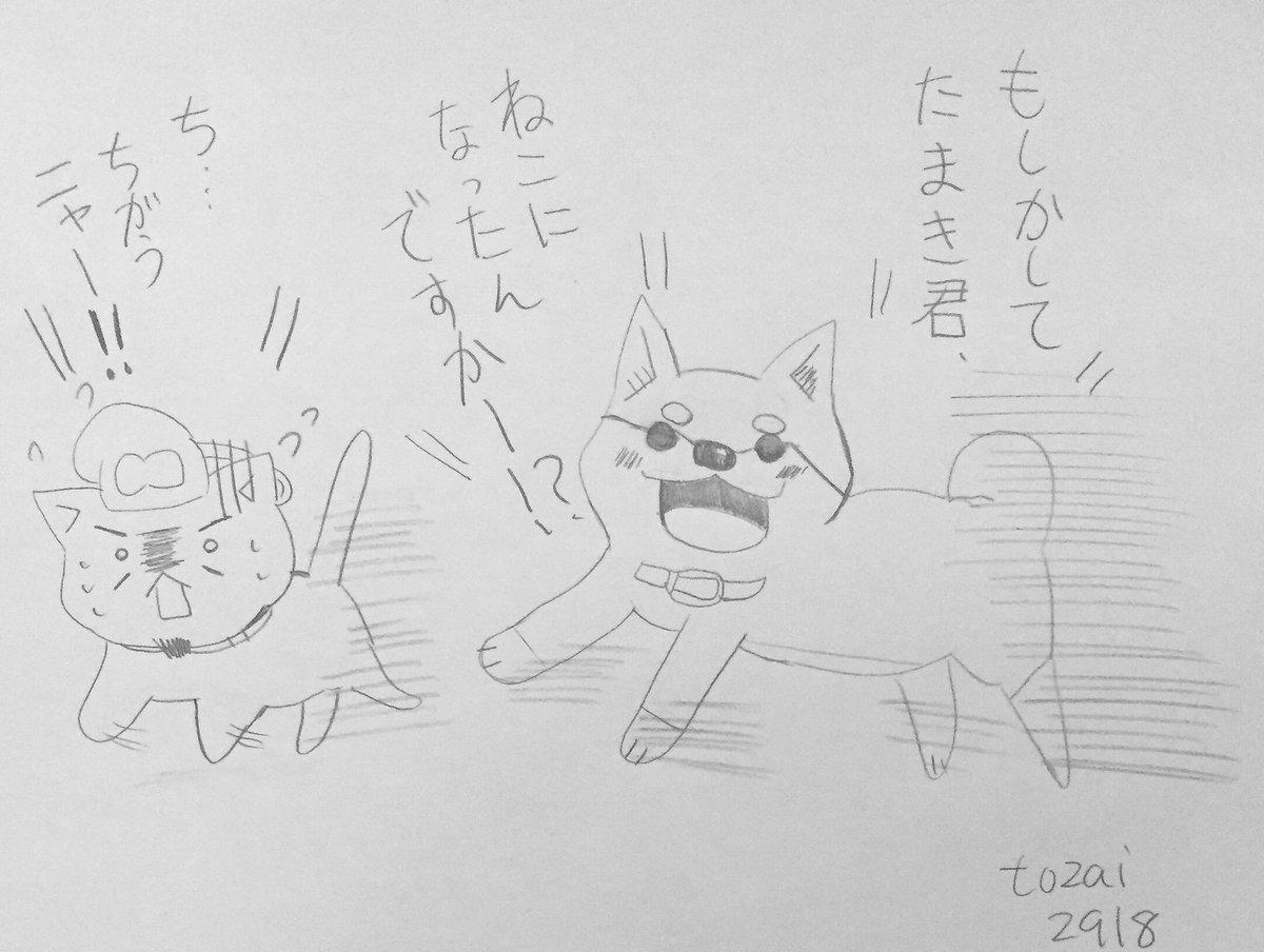 今日のねこねこ日本史   109回大変!ムーコが中の人が同じなのか、太子をたまき君と勘違いしてるよ!これじゃ小松さんが犬
