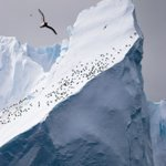 New Antarctic conservation laws