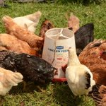 I Was With a Chicken Because I Fear Approaching Women, Bungoma Man Tells Court