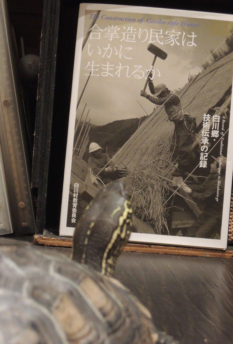 「合掌造り民家はいかに生まれるか」を5分以上眺めるクサカメの小松原松之介松太郎 通称まつ 。前世は茅葺き職人だったかな。