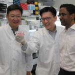 Singapore researchers devise way to test potential drug side effects using stem cells