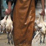 China fights new wave of bird-flu virus as dozens die
