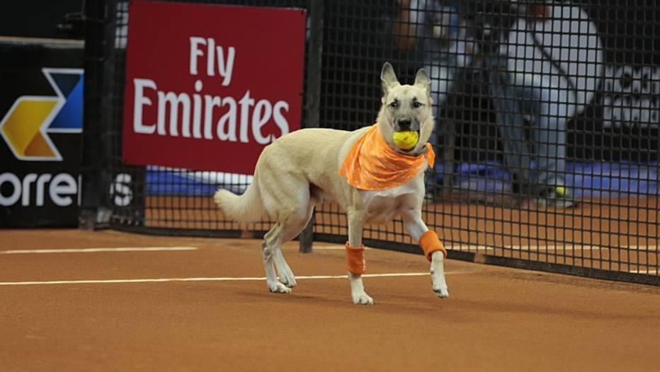 Cachorros abandonados serão gandulas de torneio de tênis em São Paulo