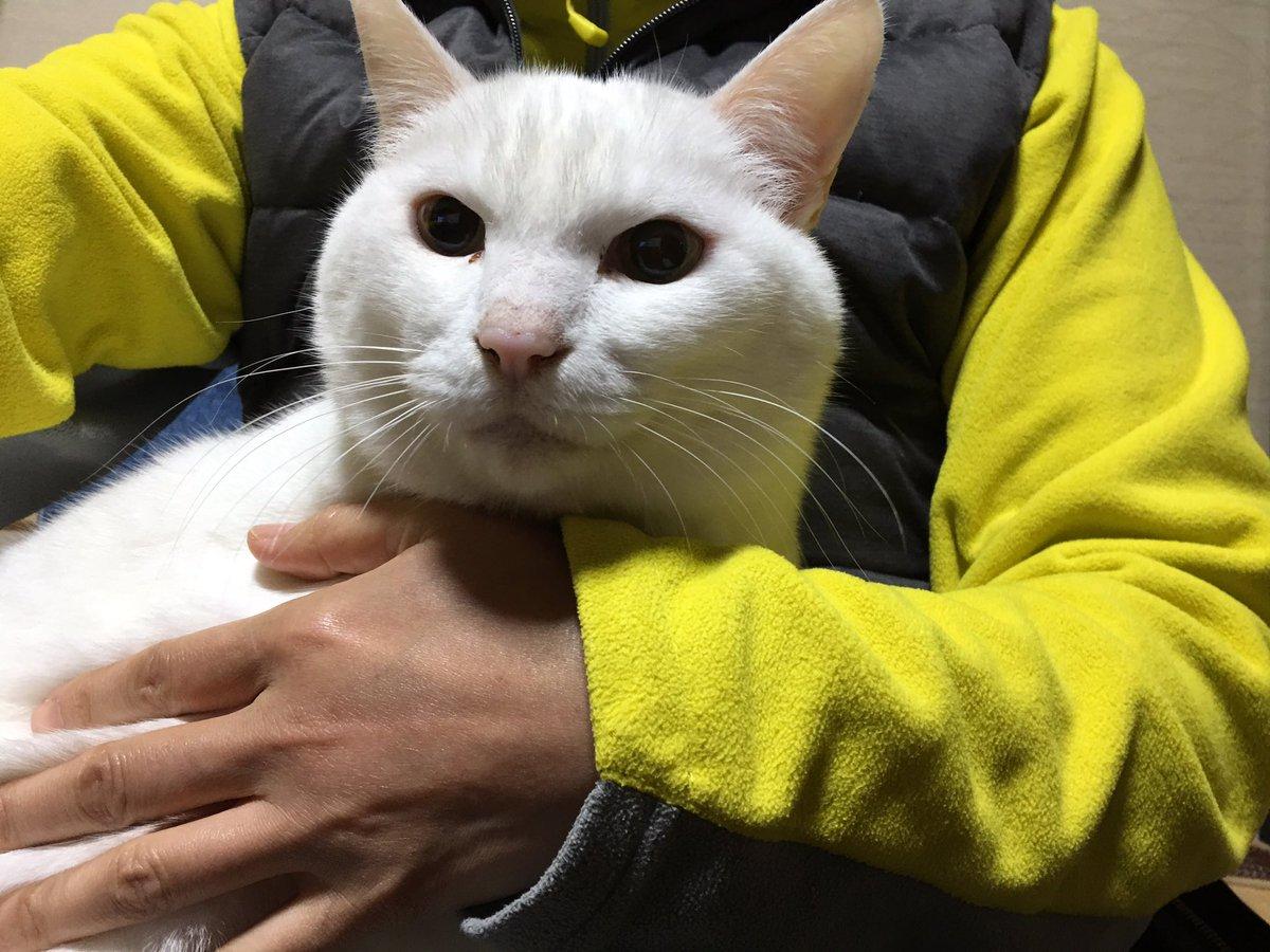 いま、家に電話したら、大変なことになっていました。うちの白猫、由紀夫(12歳)がガラス戸を開けて、外に出てしまい、2日間
