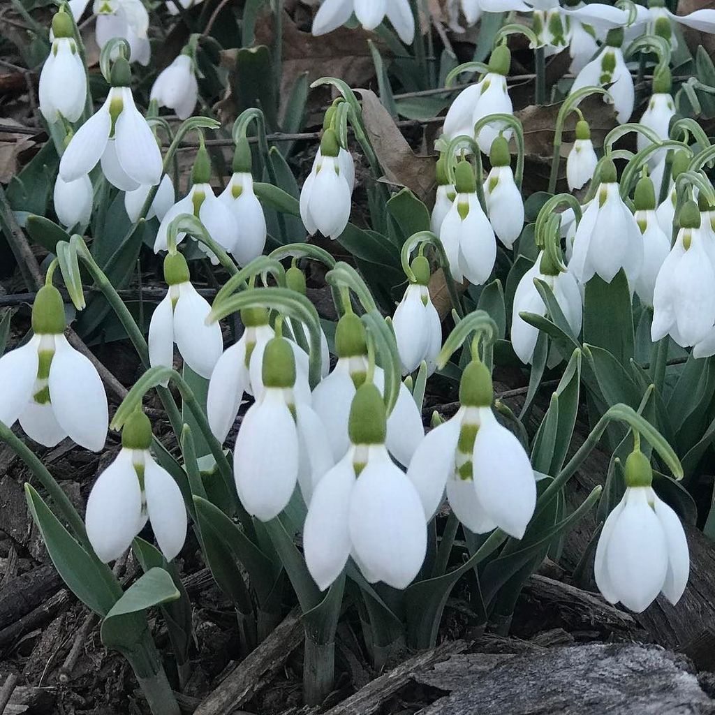That's my kinda February! #centralpark #centralparknyc #winterflowers #winterblooms #w ...