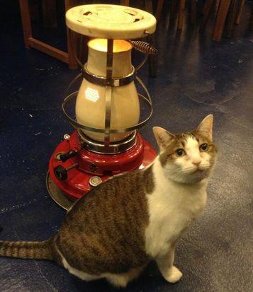 【おうちごはんcafeたまゆらん 卒業猫店員紹介】名前:こてつ サヴォンと一緒に2大巨塔と言われてた甘えん坊で大きな8.