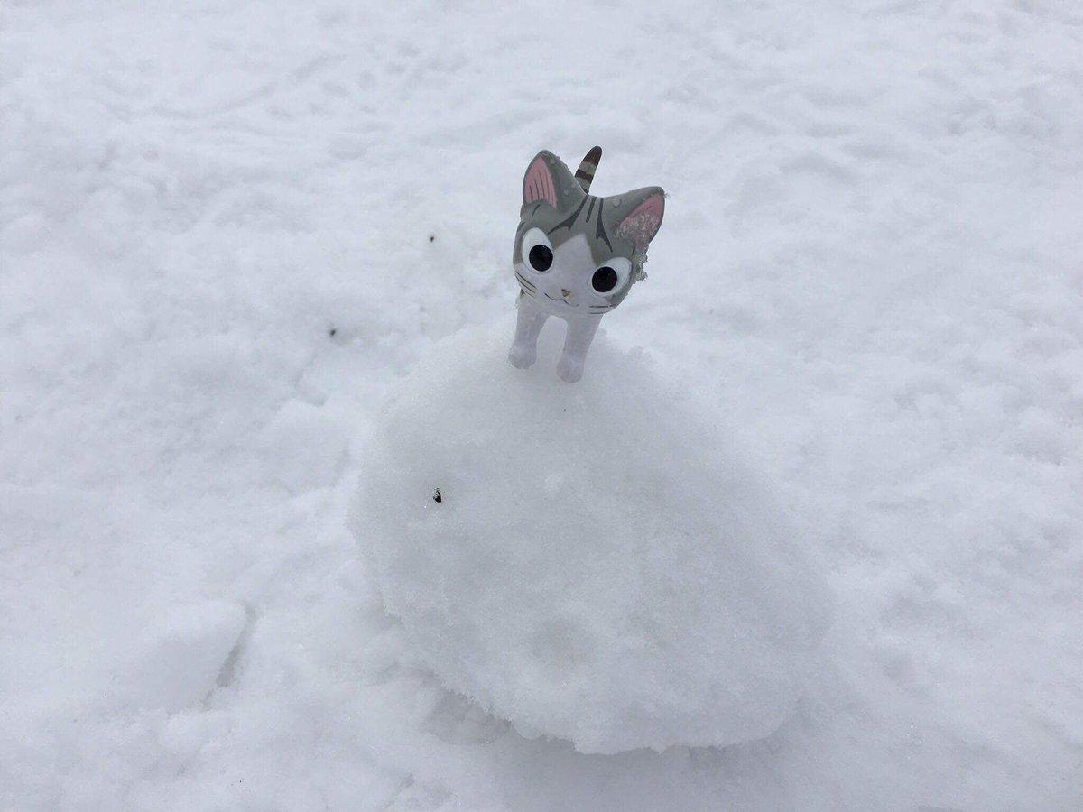 チーも 雪だるま つくったんらよ! チーが うえにのれば かんせいなのれす!#こねこのチー #北海道 #札幌 #雪だるま